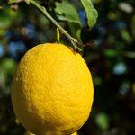 How to Grow Citrus Trees