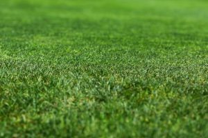Healthy-green-grass-lawn