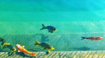 Backyard Ponds – Water Garden Tips